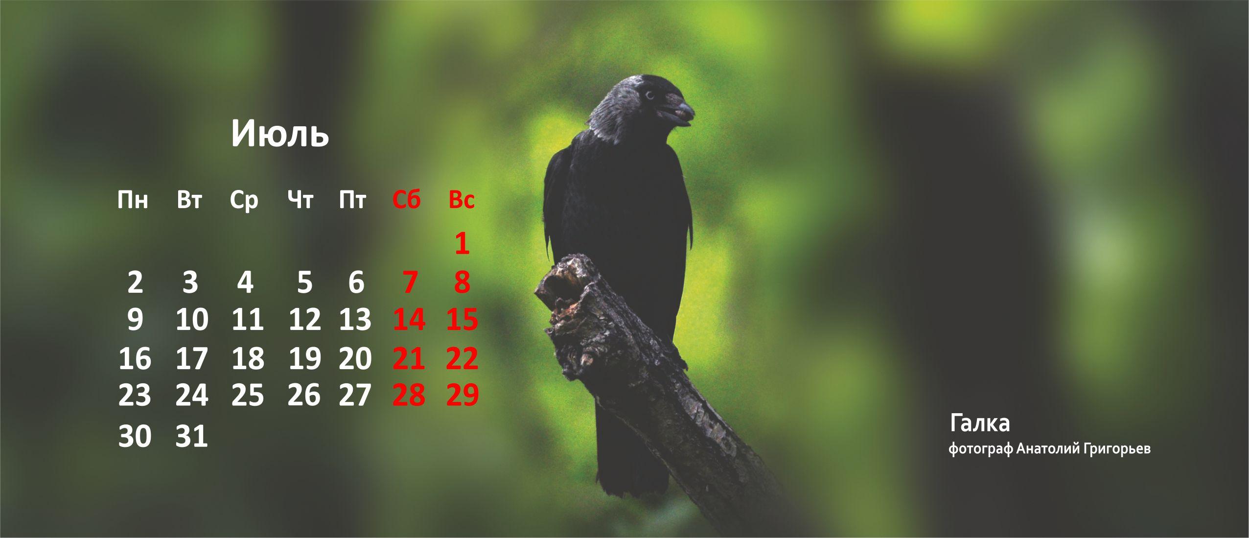 Галка Птицы Уфы 2018