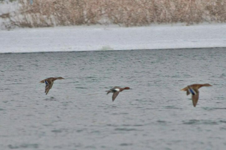 Новые виды птиц обнаружены в Уфе в зимний период