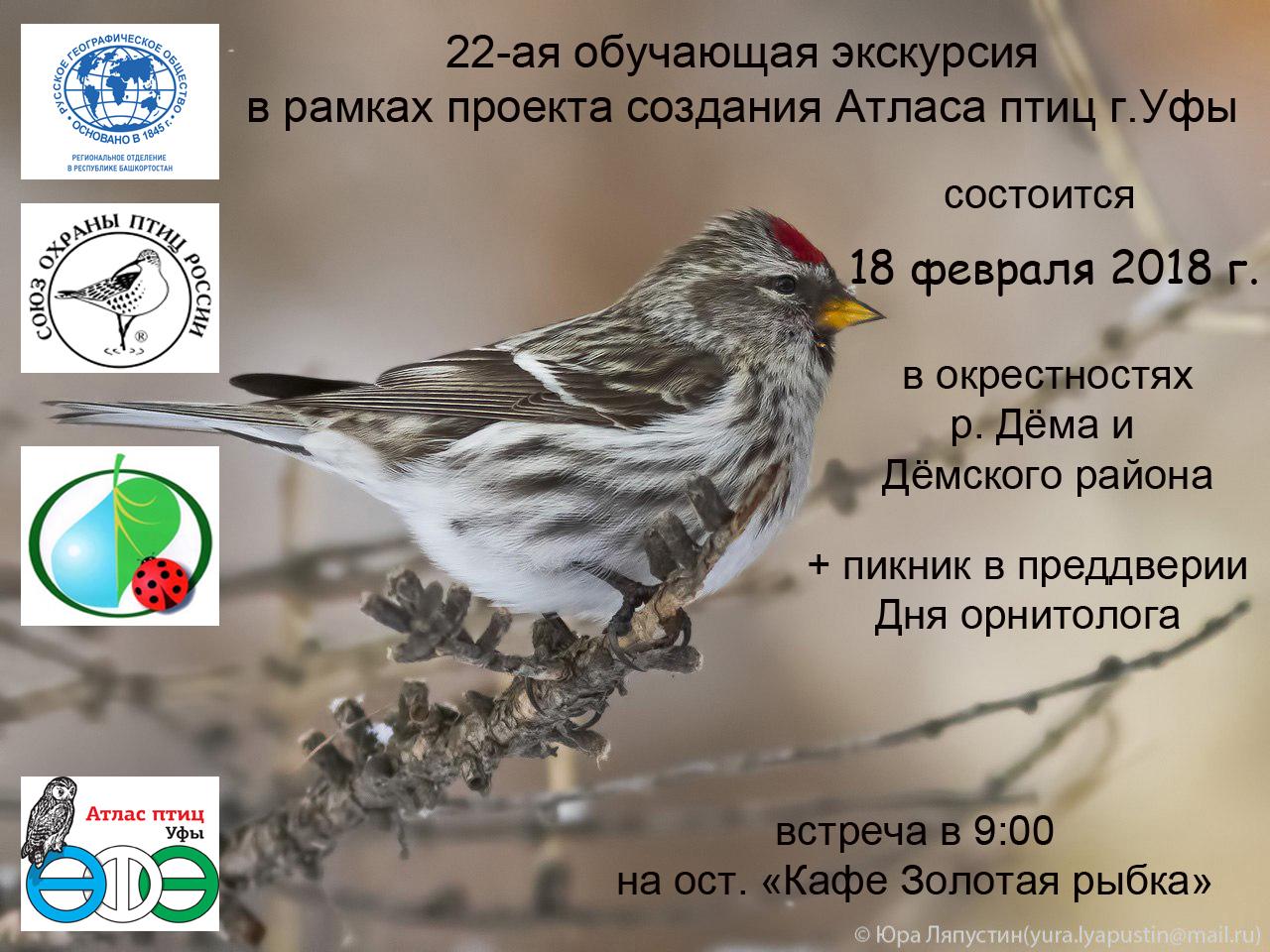 Орнитологическая экскурсия в окрестностях Дёмы в Уфе