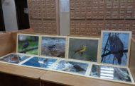 Фотовыставка «Пернатые уфимцы» в Городской Центральной библиотеке