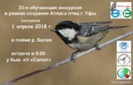 Международный День птиц – в компании уфимских орнитологов