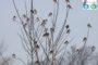 Впервые отмечена зимовка дерябы в Уфе