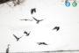 Орнитологическая экскурсия в Уфе в День птиц