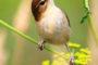 24-я обучающая орнитологическая экскурсия
