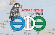 Проект Атлас птиц Уфы - итоги работы в сезоне 2018-2019