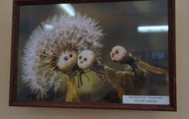 Участники проекта Атласа птиц Уфы заняли призовые места на фотоконкурсе