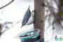 Лекция Полежанкиной П.Г. на тему «Привлечение птиц на участок»