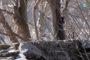 «Весенняя перекличка-2019» – лебедь-шипун