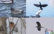 Субботник на Тёплом озере в Уфе