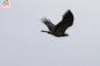 Статья о птицах в майском номере экологического журнала