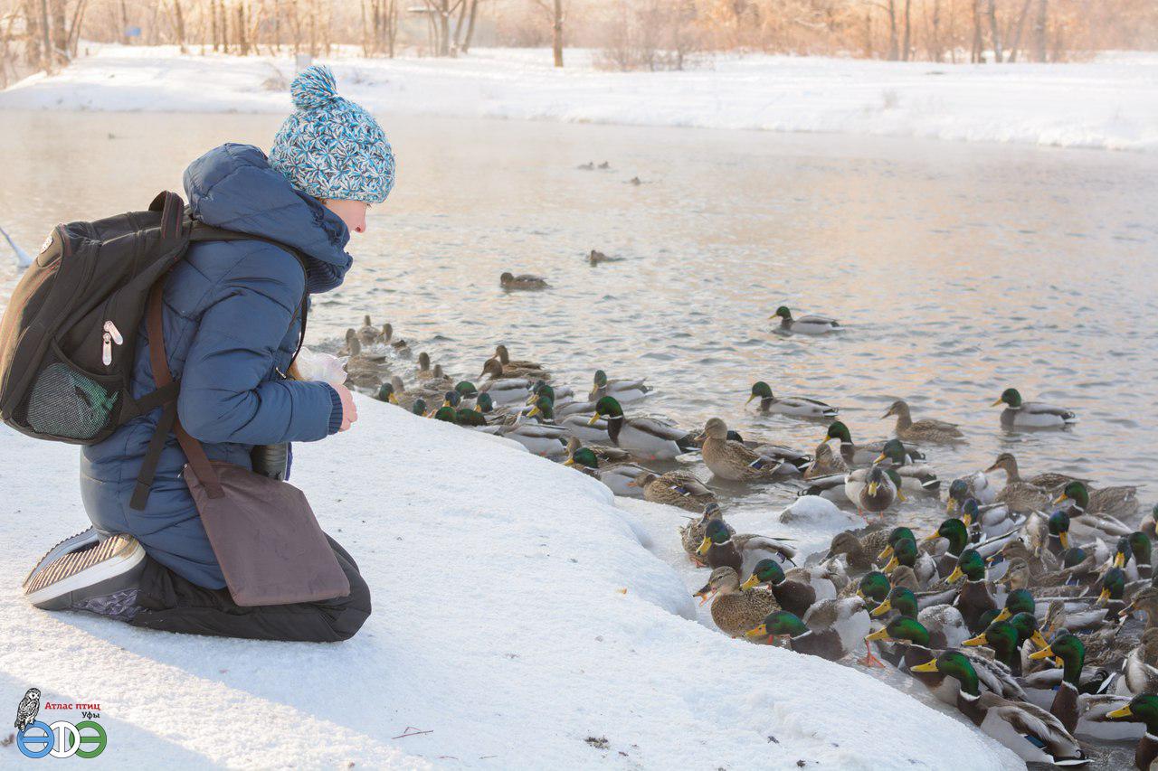 Оз. Тёплое, Уфа, 2019 г. (фото Галлямова И.)