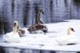 Атлас птиц Уфы на фестивале Pro Туризм