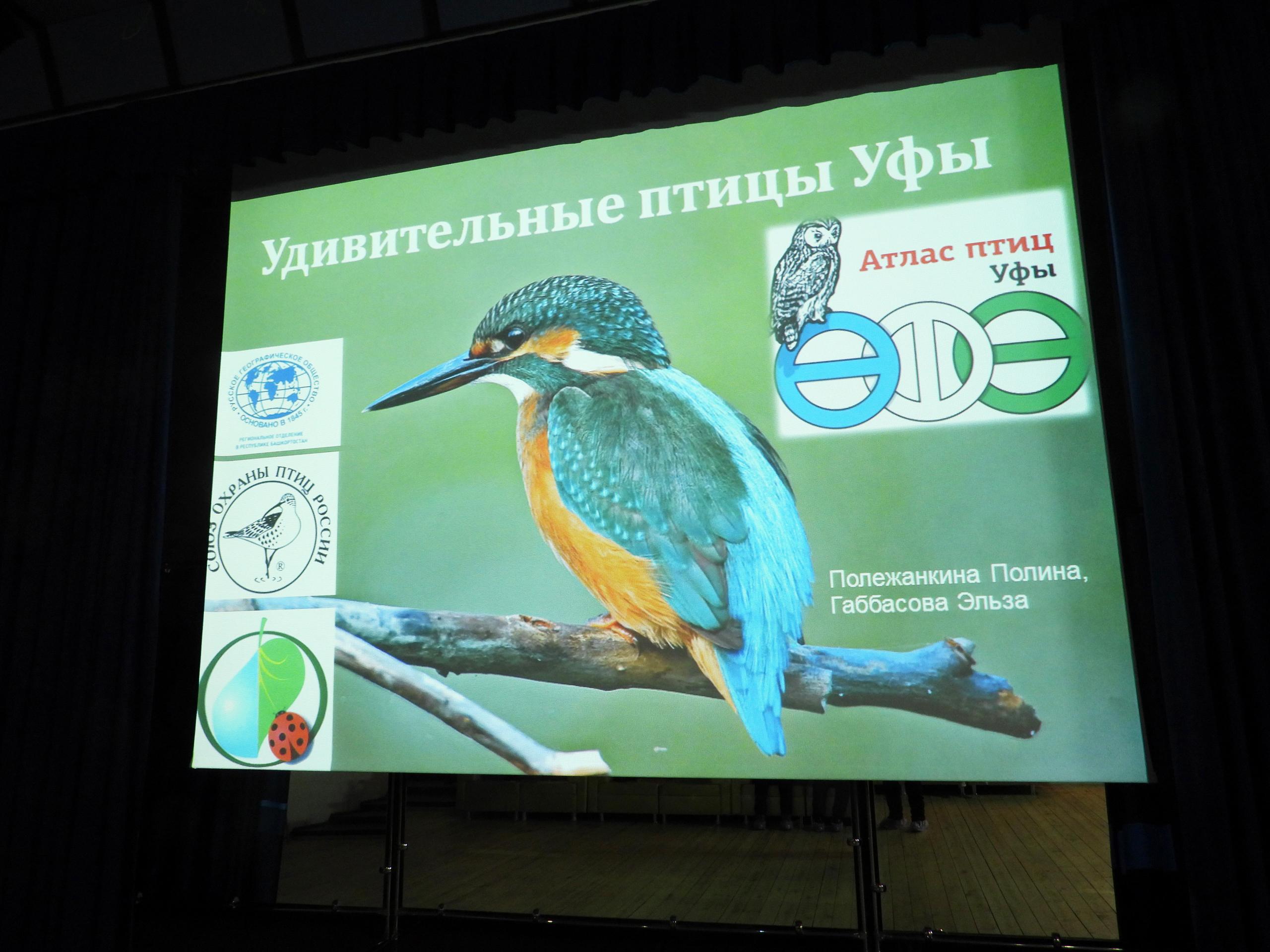 1 апреля – Всероссийский праздник «День птиц»