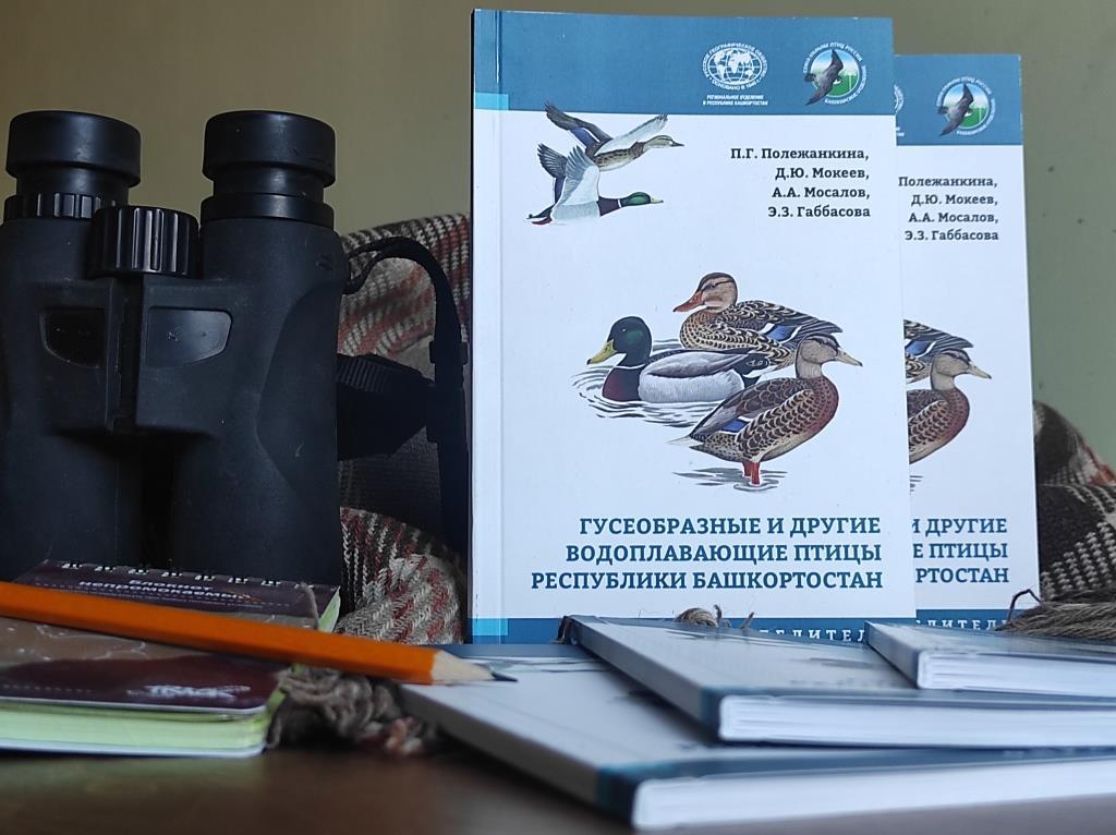 В Уфе издан определитель «Гусеобразные и другие водоплавающие птицы Республики Башкортостан»