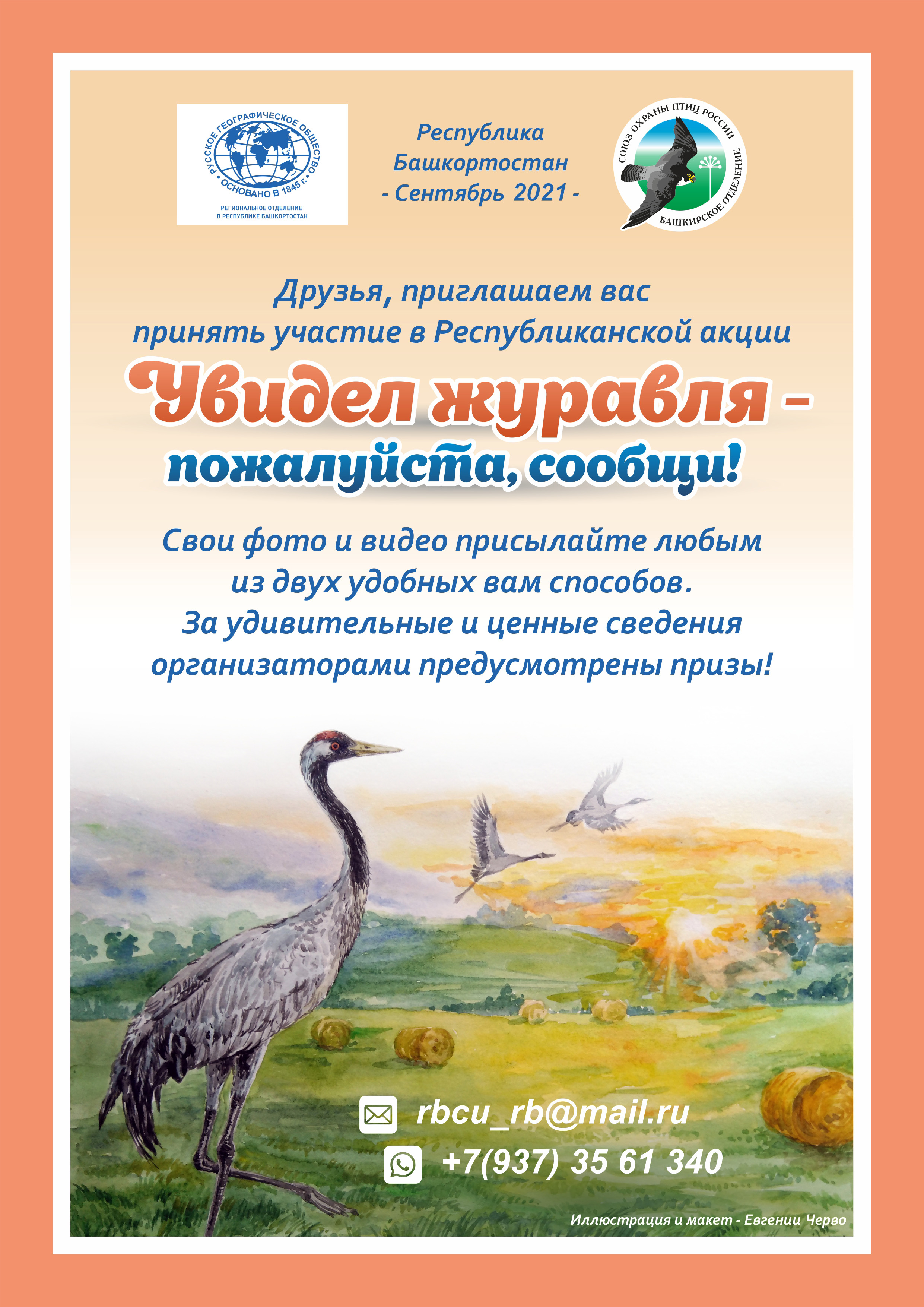 Рыжая цапля – редкий вид для орнитофауны Республики Башкортостан